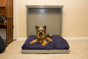 Pet Murphy Bed for Puppy or Dog